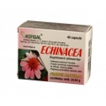 Echinaceea extract concetrat